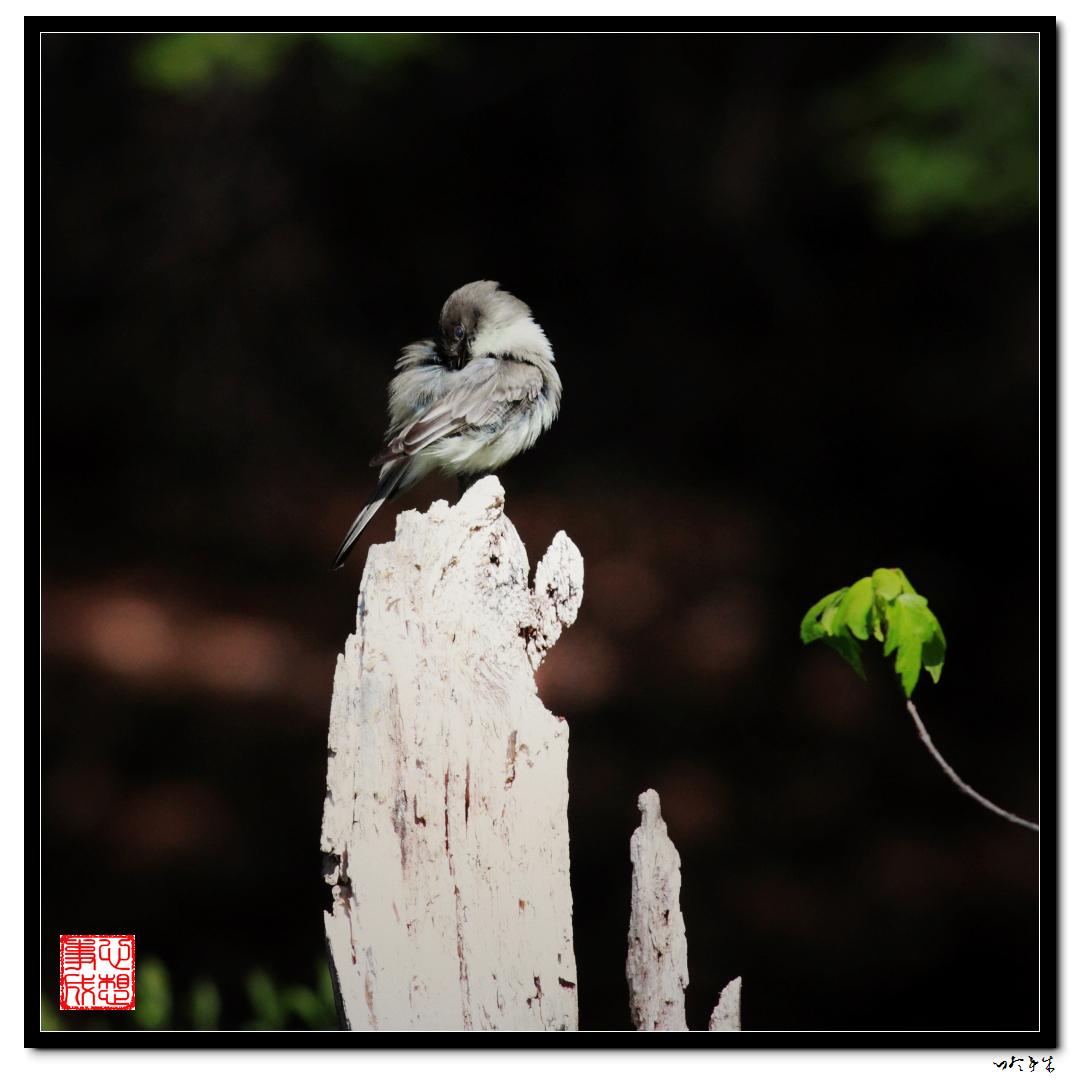 """【心想事成】""""我是一只小鸟""""_图1-1"""