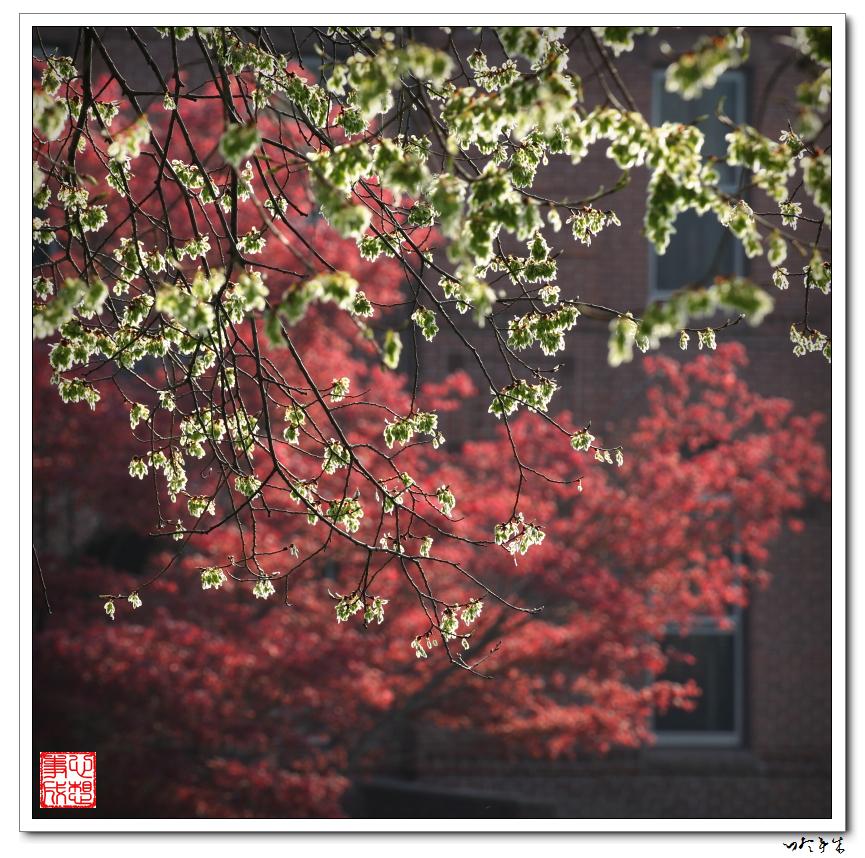【心想事成】春光色影_图1-6