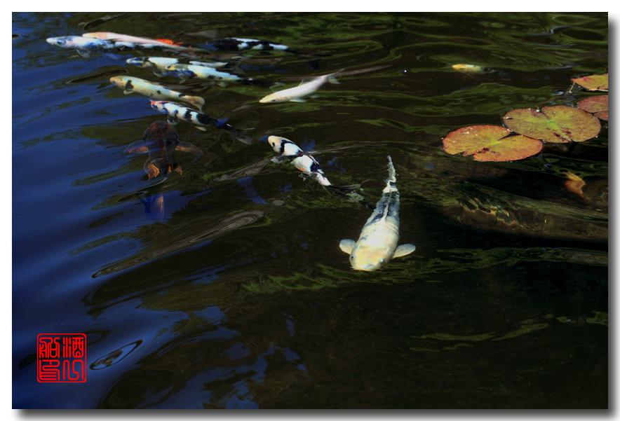 《原创摄影》: 子非鱼, 安知鱼之乐_图2-1