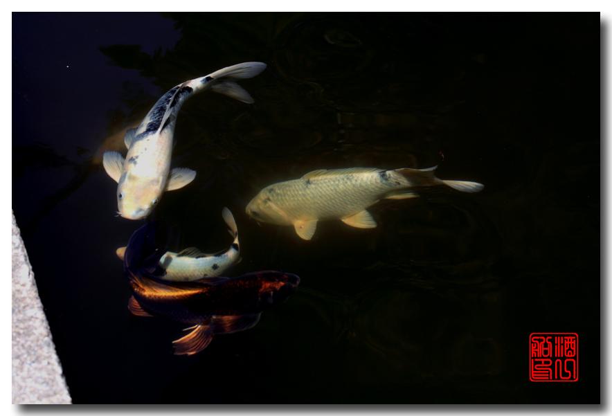 《原创摄影》: 子非鱼, 安知鱼之乐_图2-2