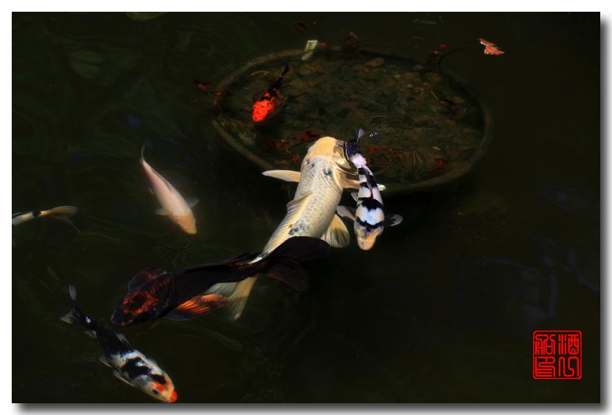 《原创摄影》: 子非鱼, 安知鱼之乐_图2-3