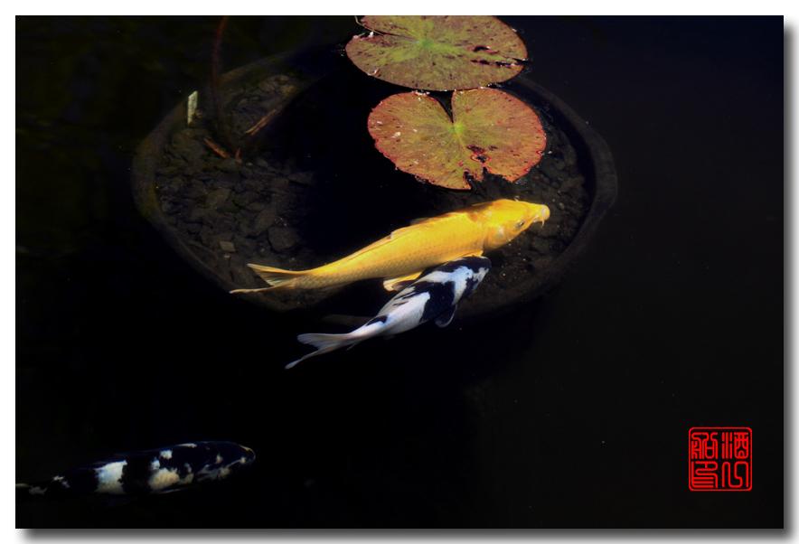 《原创摄影》: 子非鱼, 安知鱼之乐_图2-4