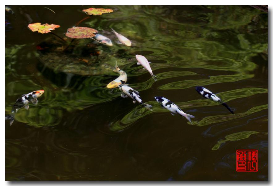 《原创摄影》: 子非鱼, 安知鱼之乐_图2-6