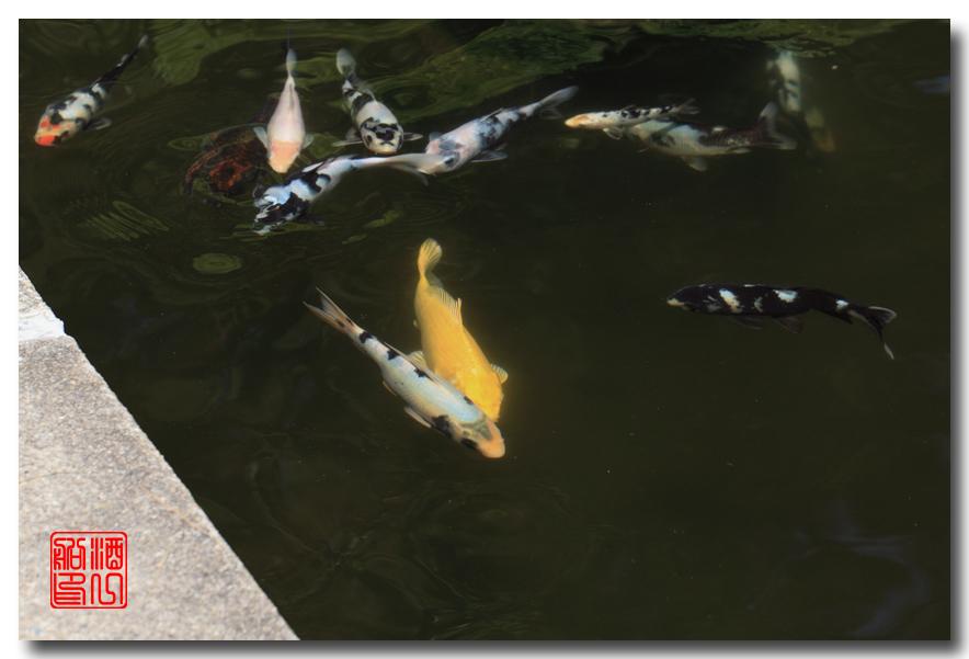 《原创摄影》: 子非鱼, 安知鱼之乐_图2-7