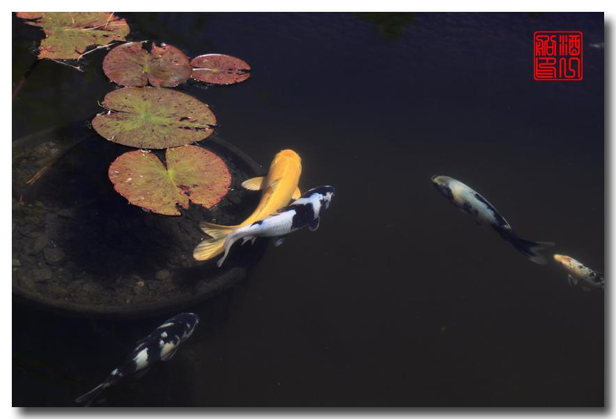 《原创摄影》: 子非鱼, 安知鱼之乐_图2-9