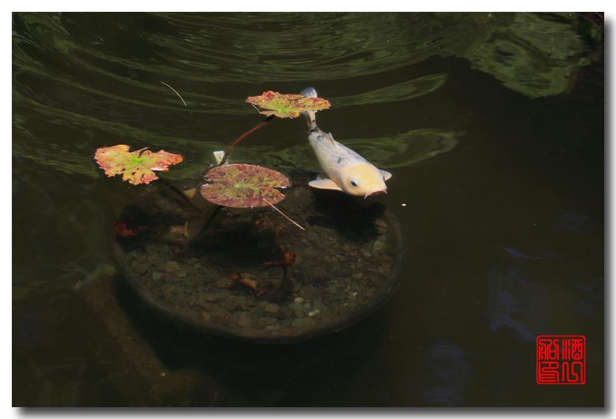 《原创摄影》: 子非鱼, 安知鱼之乐_图2-10