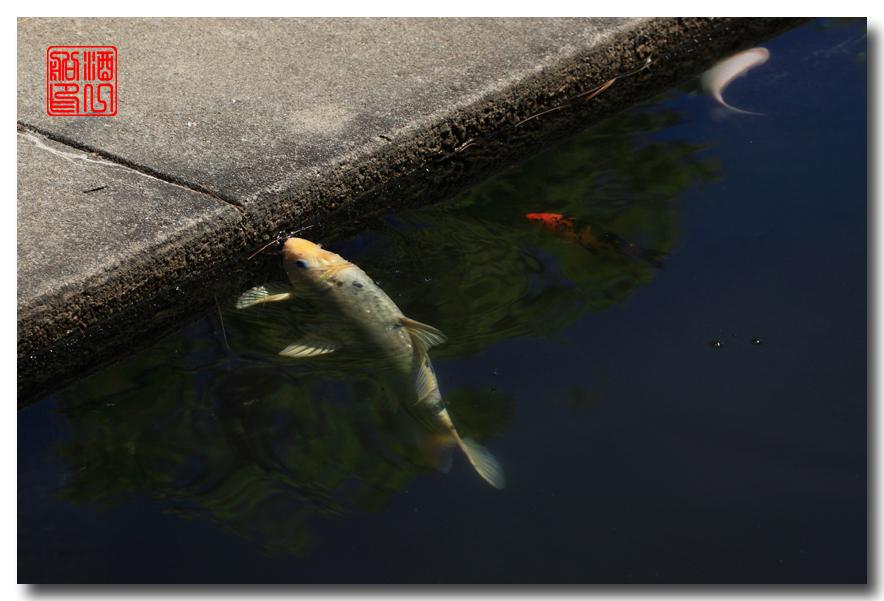 《原创摄影》: 子非鱼, 安知鱼之乐_图2-12