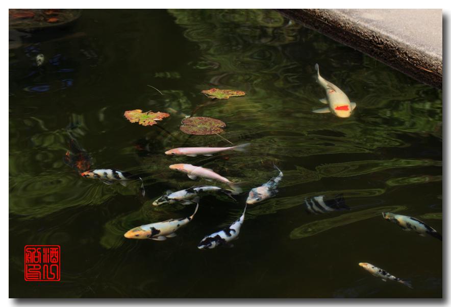 《原创摄影》: 子非鱼, 安知鱼之乐_图2-13