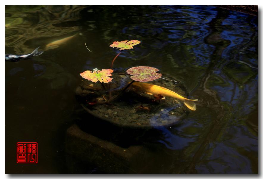《原创摄影》: 子非鱼, 安知鱼之乐_图2-14