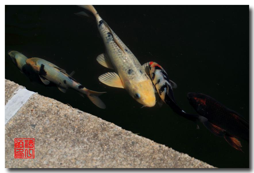 《原创摄影》: 子非鱼, 安知鱼之乐_图2-17