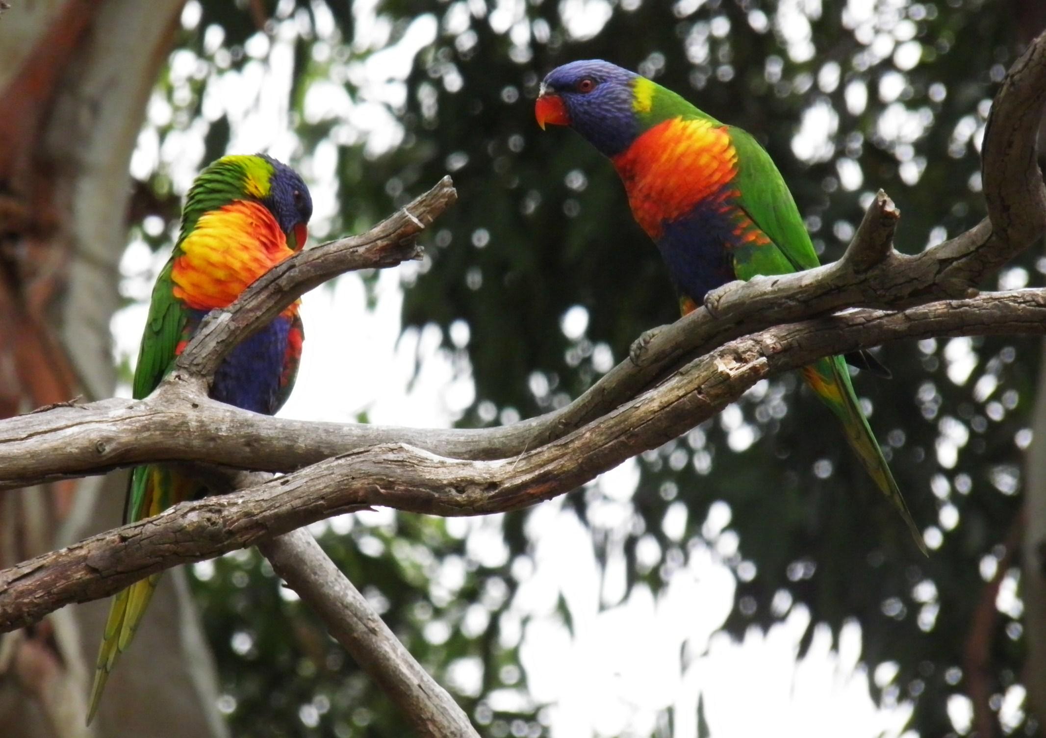 鹦鹉嘴的是什么动物