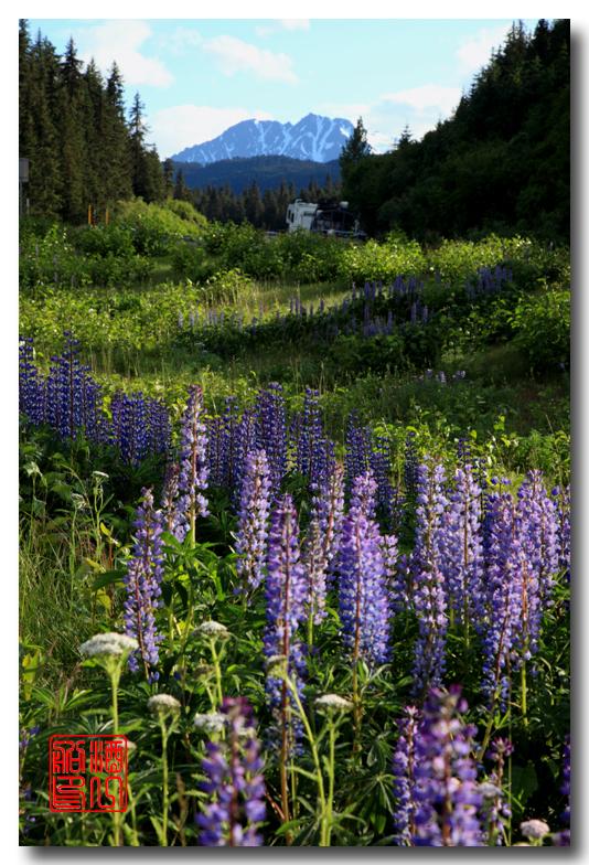《原创摄影》:观景公路,景观如画:梦中的阿拉斯加之十九 ... ... ... ..._图1-50