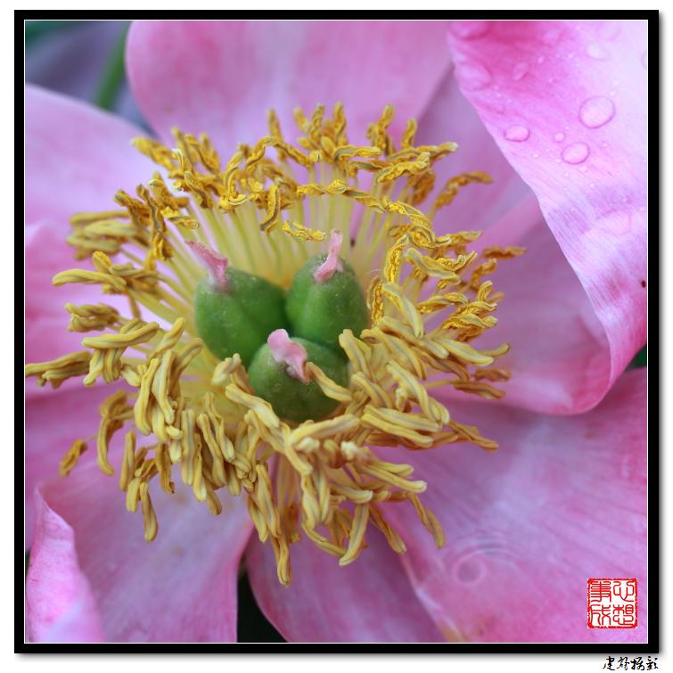 【心想事成】雨后的花朵_图1-1