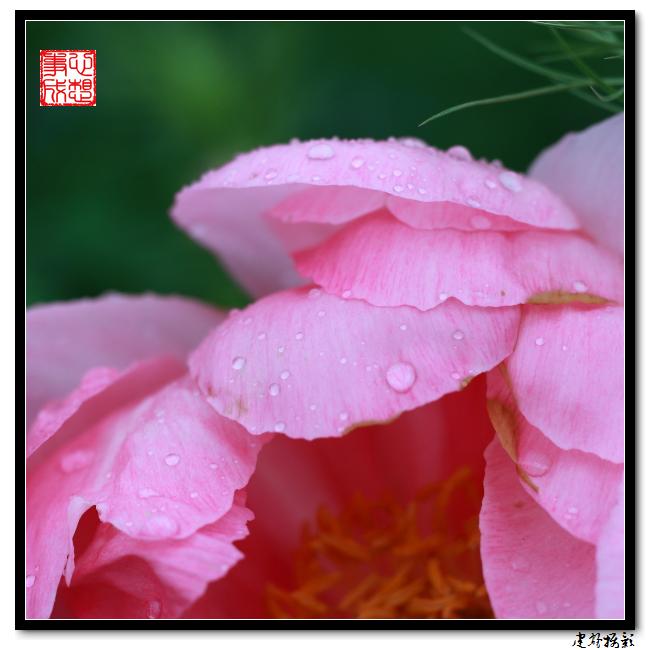 【心想事成】雨后的花朵_图1-3