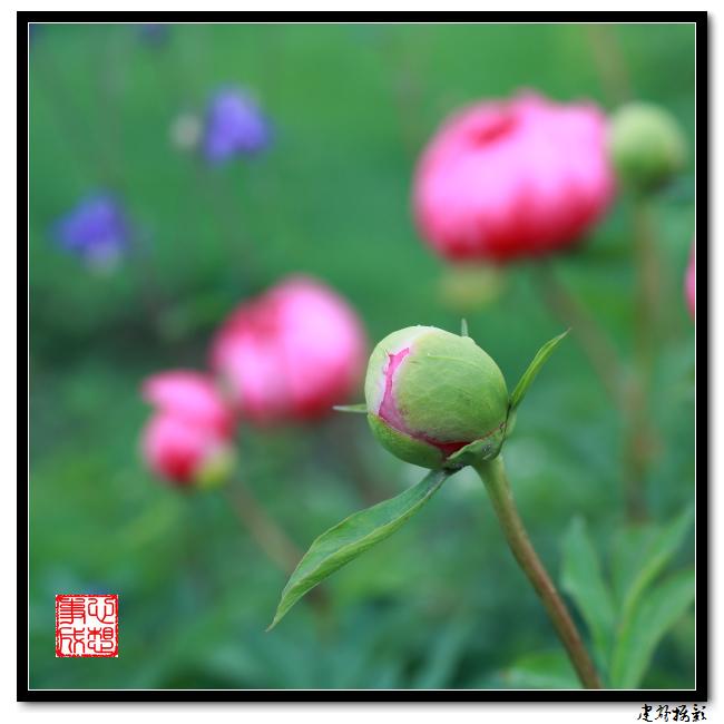 【心想事成】雨后的花朵_图1-5