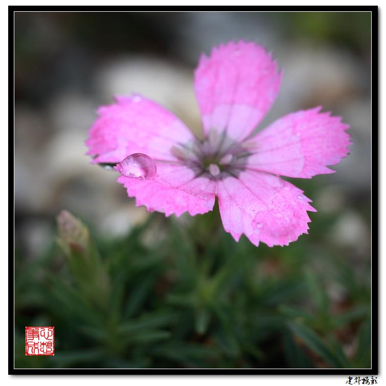 【心想事成】雨后的花朵_图1-6