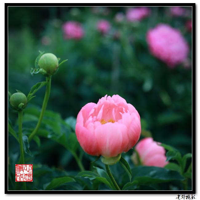 【心想事成】雨后的花朵_图1-7