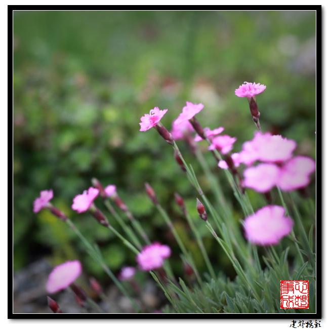 【心想事成】雨后的花朵_图1-8