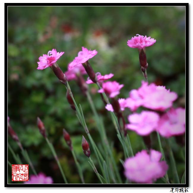 【心想事成】雨后的花朵_图1-9