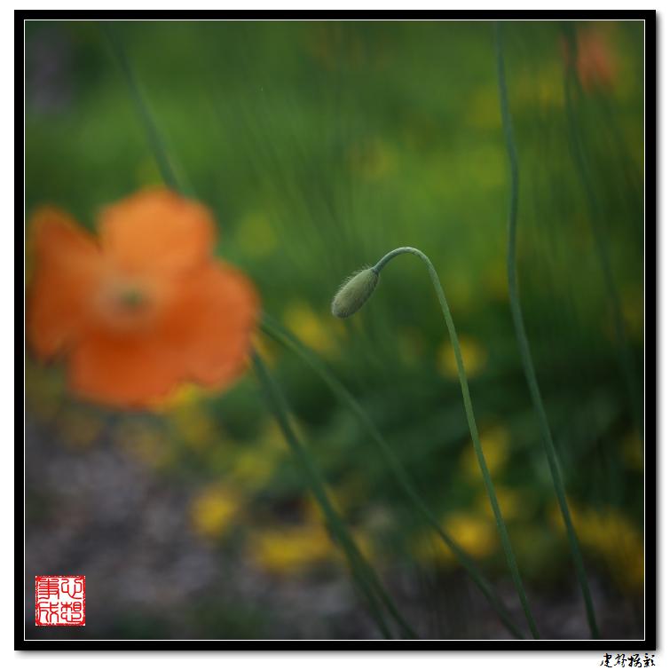 【心想事成】雨后的花朵_图1-11