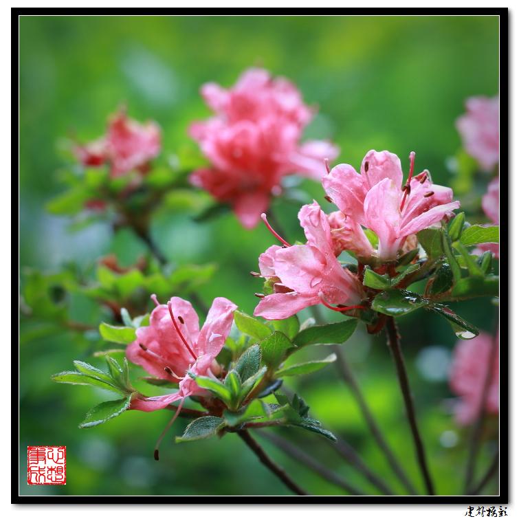 【心想事成】雨后的花朵_图1-13