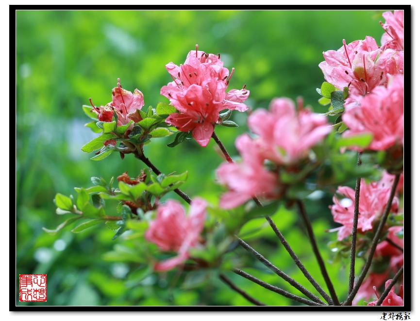 【心想事成】雨后的花朵_图1-14