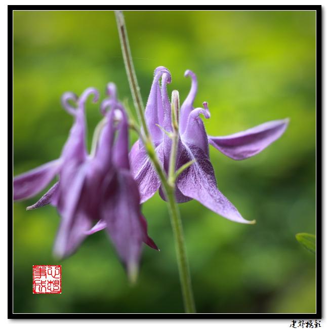 【心想事成】雨后的花朵_图1-15