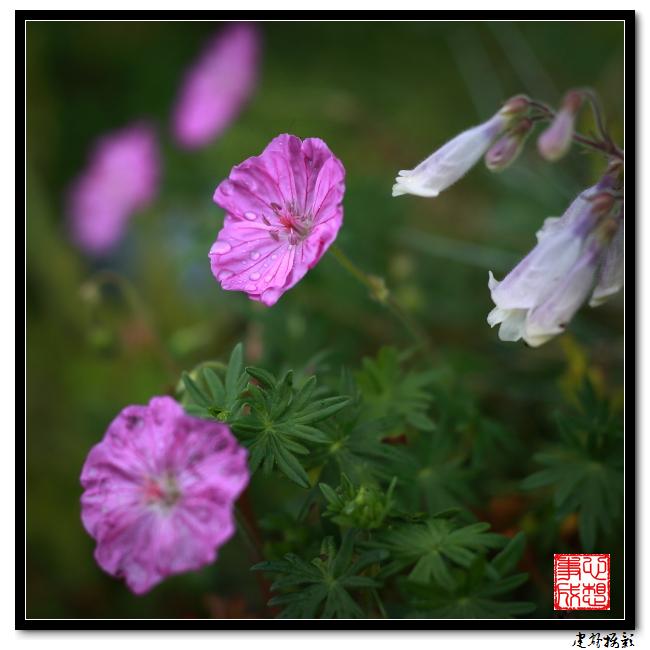 【心想事成】雨后的花朵_图1-17