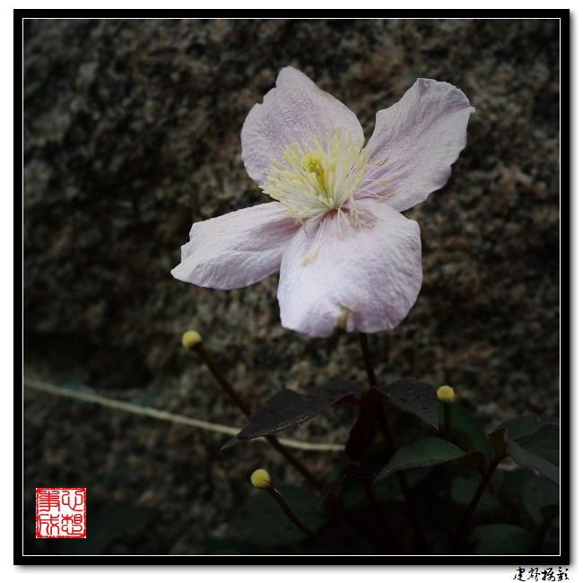 【心想事成】雨后的花朵_图1-18