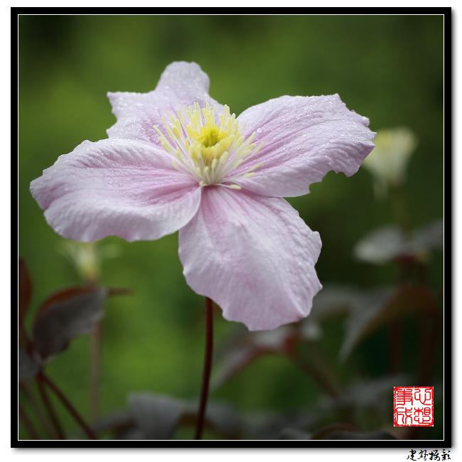 【心想事成】雨后的花朵_图1-19