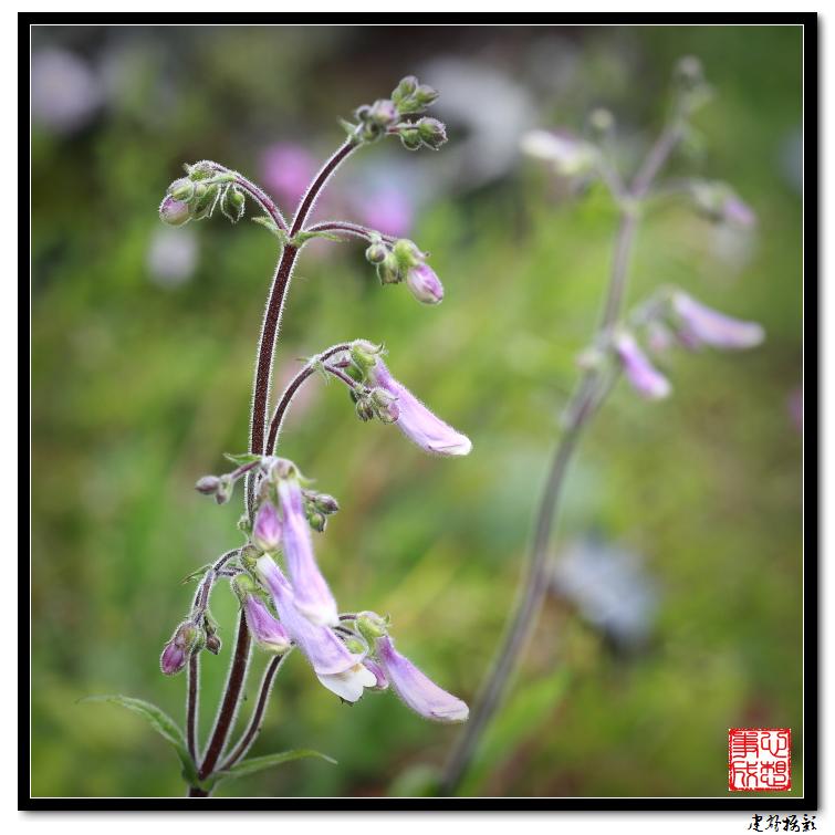 【心想事成】雨后的花朵_图1-20