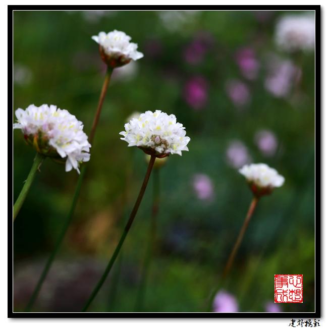 【心想事成】雨后的花朵_图1-22