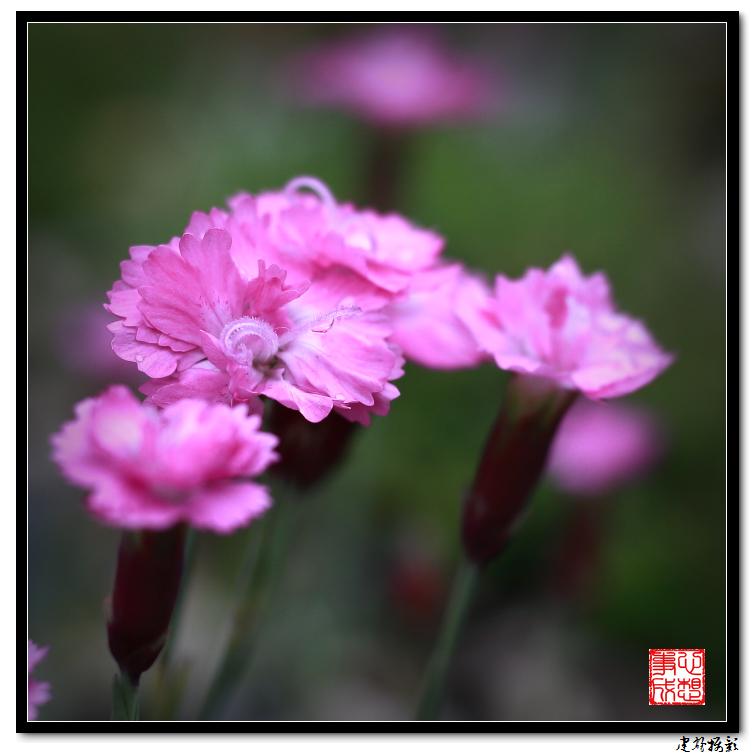 【心想事成】雨后的花朵_图1-23