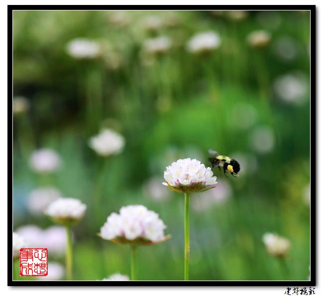 【心想事成】雨后的花朵_图1-24