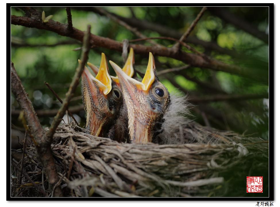 【心想事成】为我家门前的鸟巢拍个照_图1-2