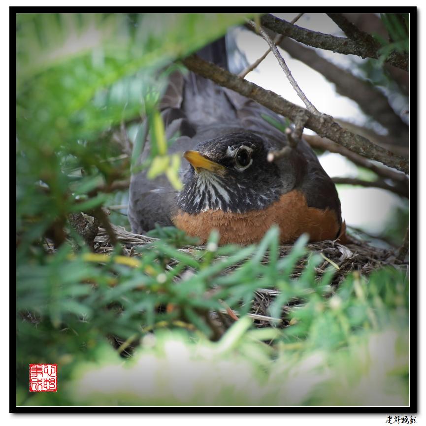 【心想事成】为我家门前的鸟巢拍个照_图1-3