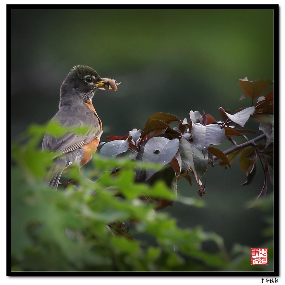 【心想事成】为我家门前的鸟巢拍个照_图1-1
