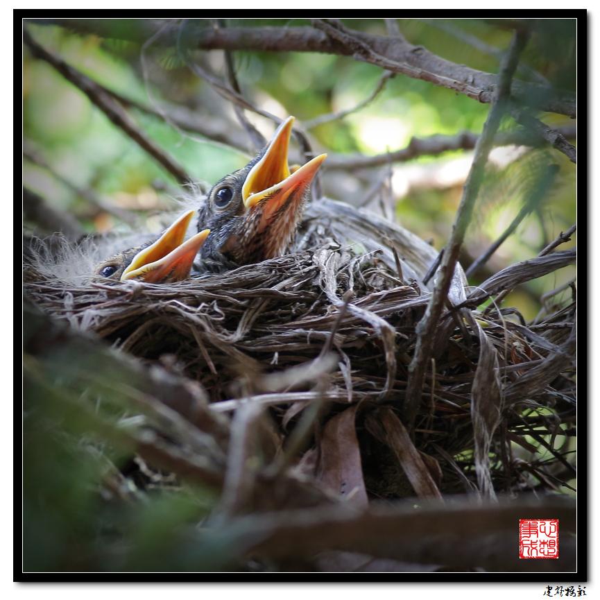 【心想事成】为我家门前的鸟巢拍个照_图1-4