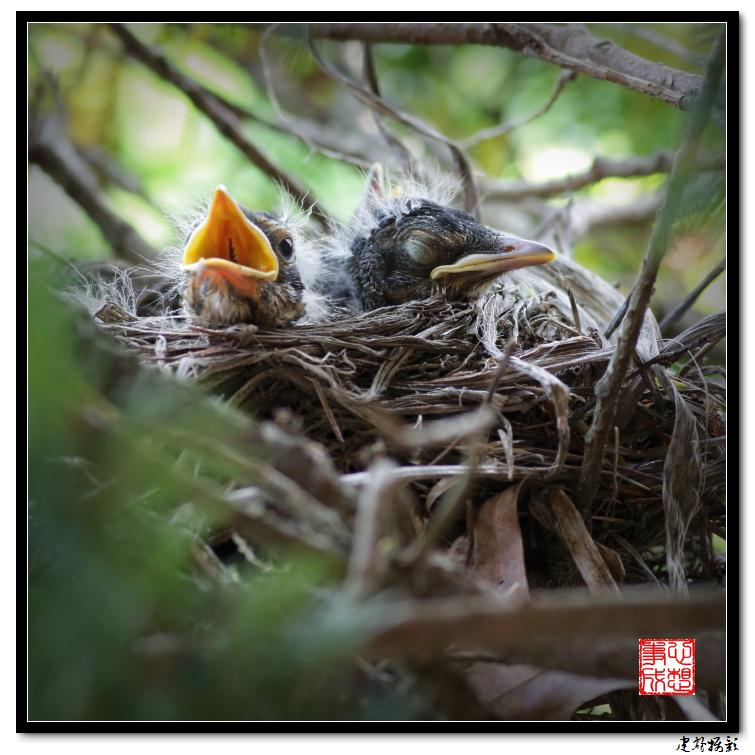 【心想事成】为我家门前的鸟巢拍个照_图1-5