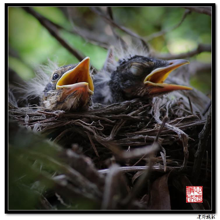 【心想事成】为我家门前的鸟巢拍个照_图1-6