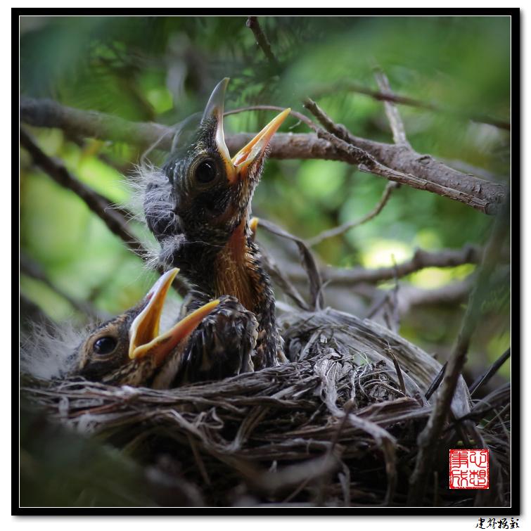 【心想事成】为我家门前的鸟巢拍个照_图1-7
