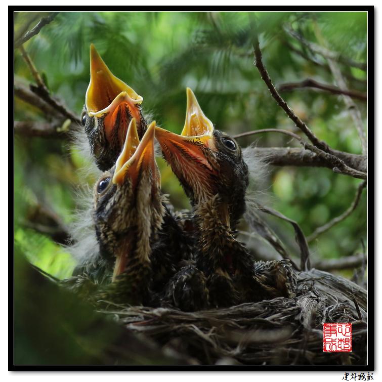 【心想事成】为我家门前的鸟巢拍个照_图1-8