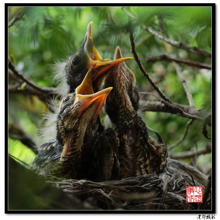 【心想事成】为我家门前的鸟巢拍个照_图1-9