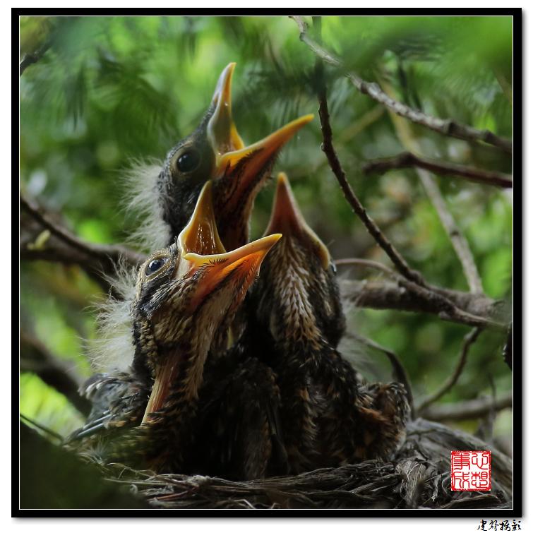 【心想事成】为我家门前的鸟巢拍个照_图1-10
