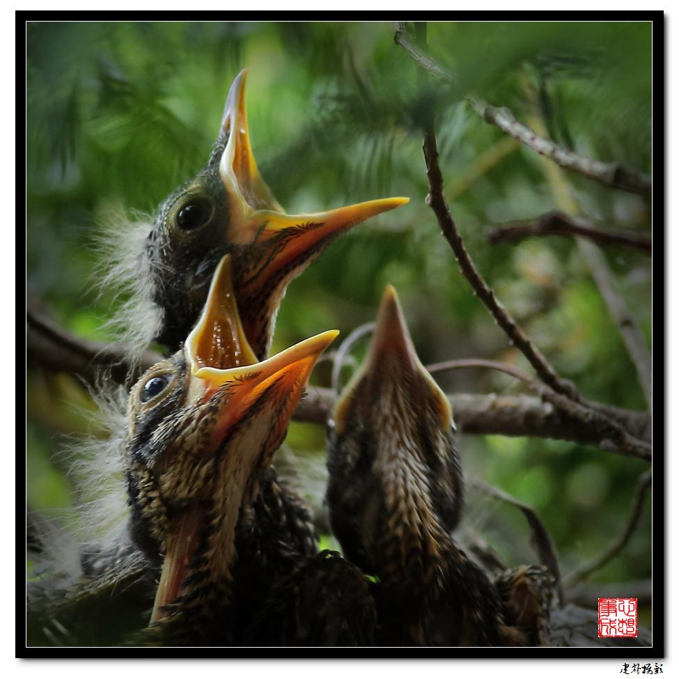 【心想事成】为我家门前的鸟巢拍个照_图1-11