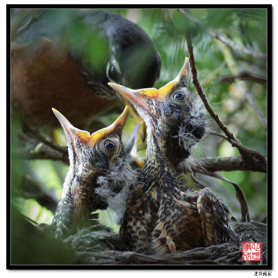 【心想事成】为我家门前的鸟巢拍个照_图1-12