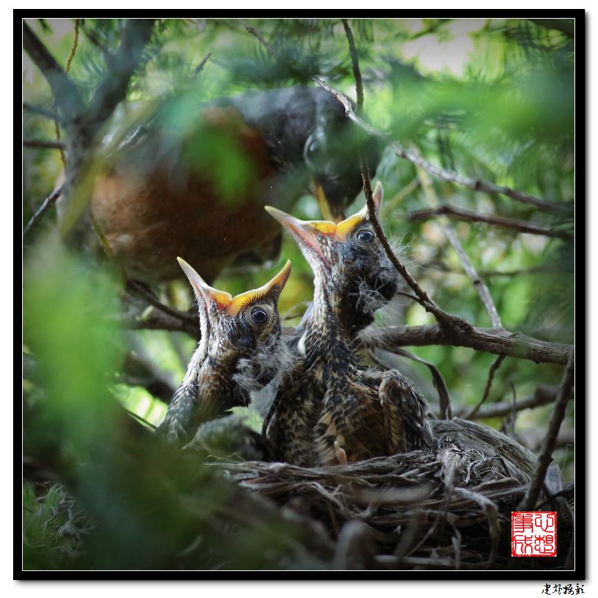 【心想事成】为我家门前的鸟巢拍个照_图1-13
