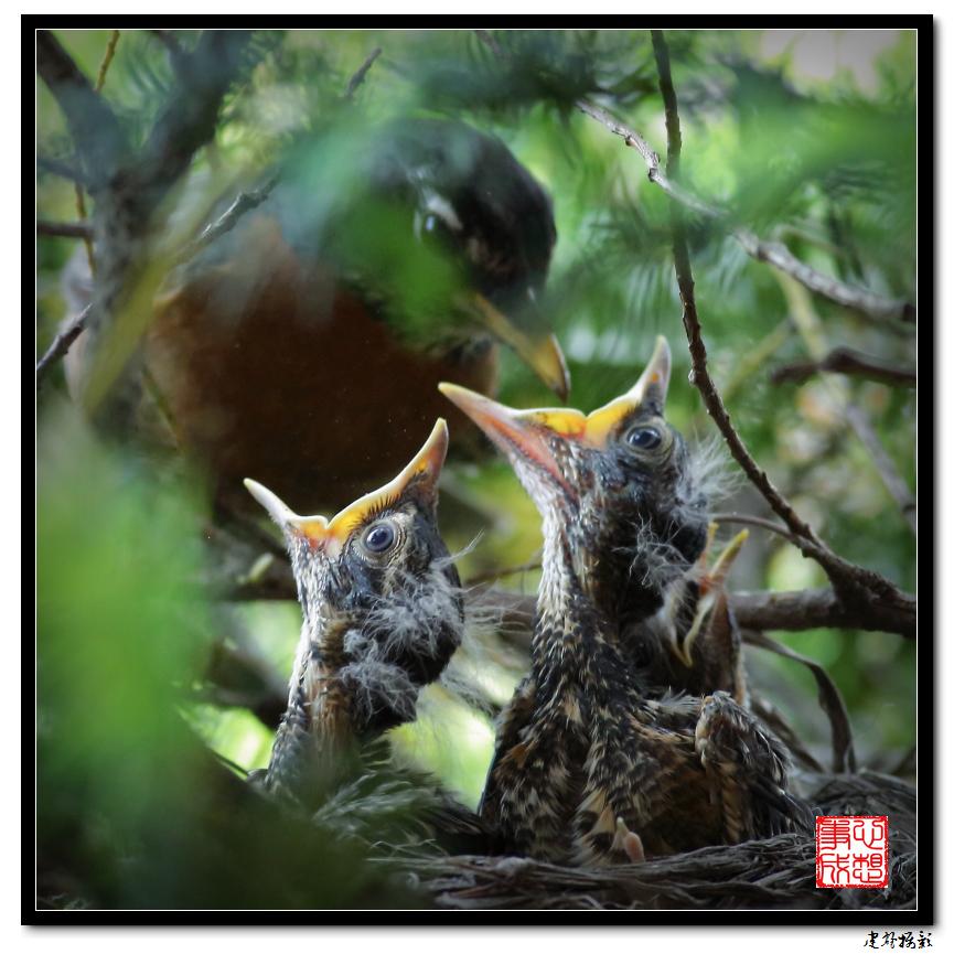 【心想事成】为我家门前的鸟巢拍个照_图1-14