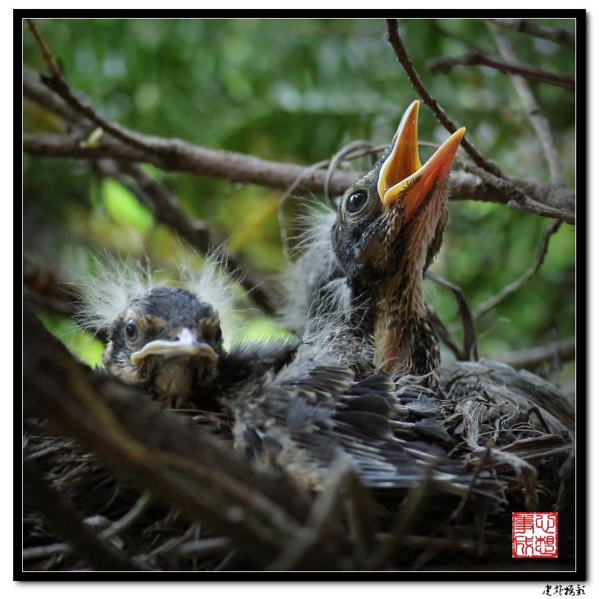 【心想事成】为我家门前的鸟巢拍个照_图1-16