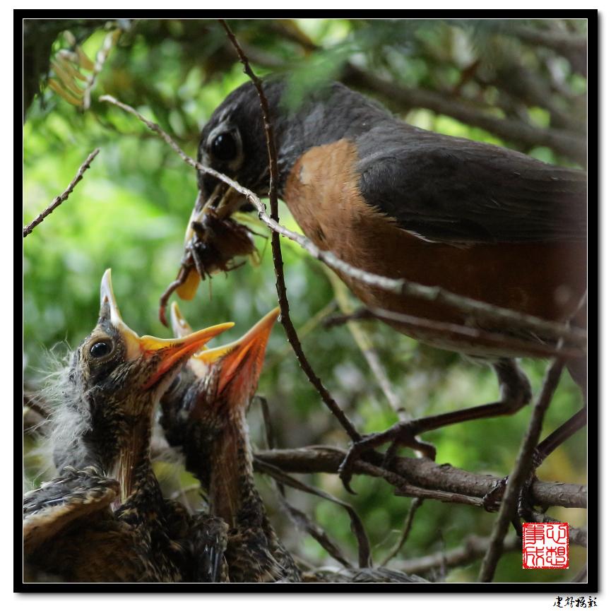 【心想事成】为我家门前的鸟巢拍个照_图1-17